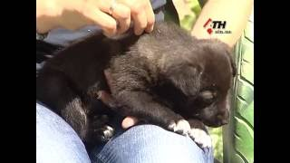 25.05.16 - В Харькове патрульные спасли двухмесячного щенка