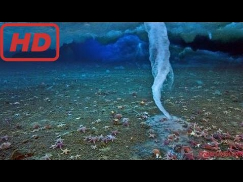 How Life Lives in the Coldest Oceans : Documentary Life in the Antarctic Ocean Bottom