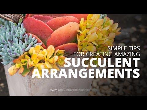 Succulent Design Tips | Simple Tools for Creating Amazing Succulent Arrangements