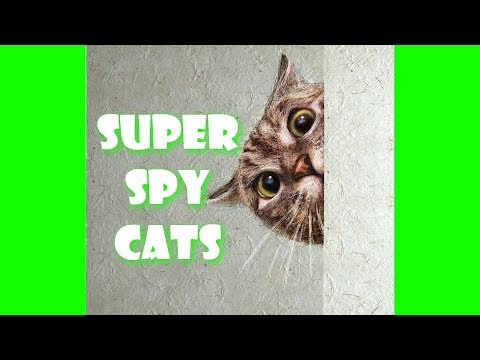 CATS ARE THE