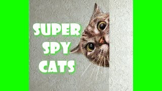CATS ARE THE SNEAKIEST SPIES – Ninja Cat Compilation
