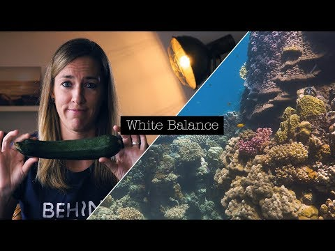 HOW TO SET MANUAL WHITE BALANCE FOR UNDERWATER FILMING