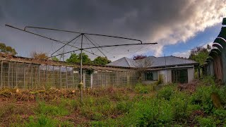Abandoned: Bird & glass obsessed - house