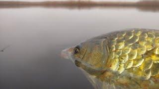 3800 РЕКОРД рыбалка на КАРАСЯ ЧЕСНОК в действии