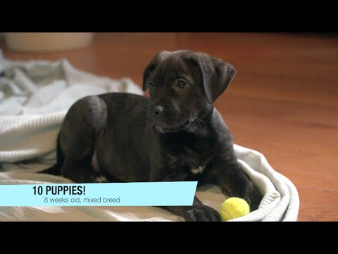 For Pets' Sake: PUPPIES and Kittens