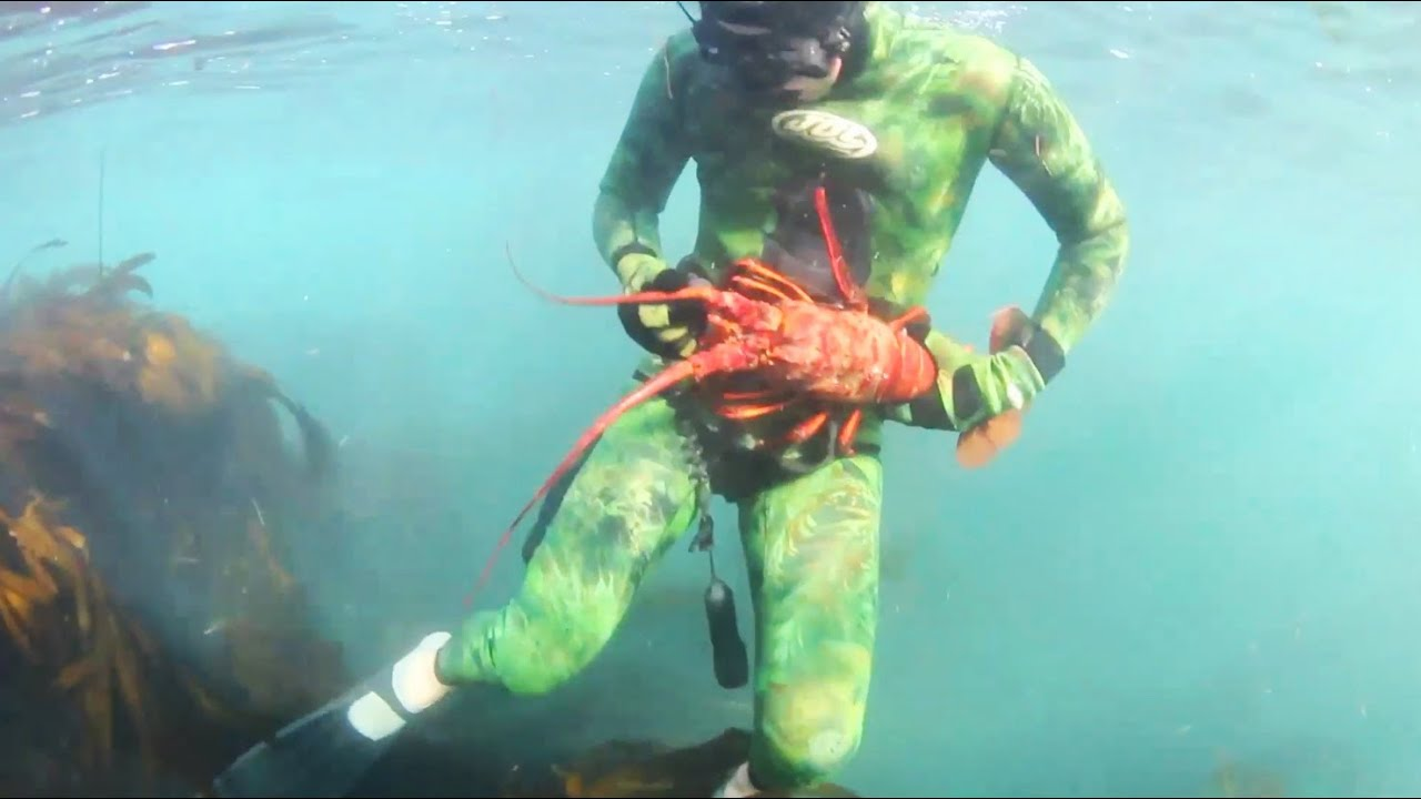 Lobster diving in Laguna Beach (re-up w/ mo betta music) - YouTube