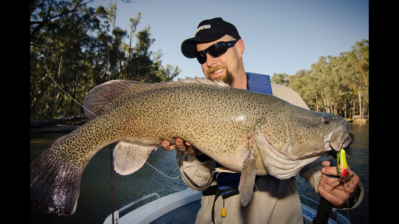 catch the mighty murray cod by The murray river region knows exactly how to get visitors' blood pumping see the mighty murray river in a totally unique way with a 12,000-foot skydive at corowa the 45-second freefall gets divers travelling as fast as 200 kilometres per hour fortunately, there's time to breathe and admire the pristine.