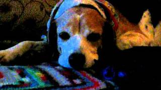 Big On Beagles Presents An Angel In Our Midst, Part I
