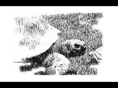 Carnival of the Animals - Tortoises