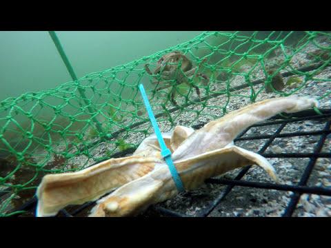 Crabbing on Seattle Pier W/ GoPro Underwater 2015