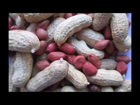Harvesting and Processing Peanuts in Northern Indiana