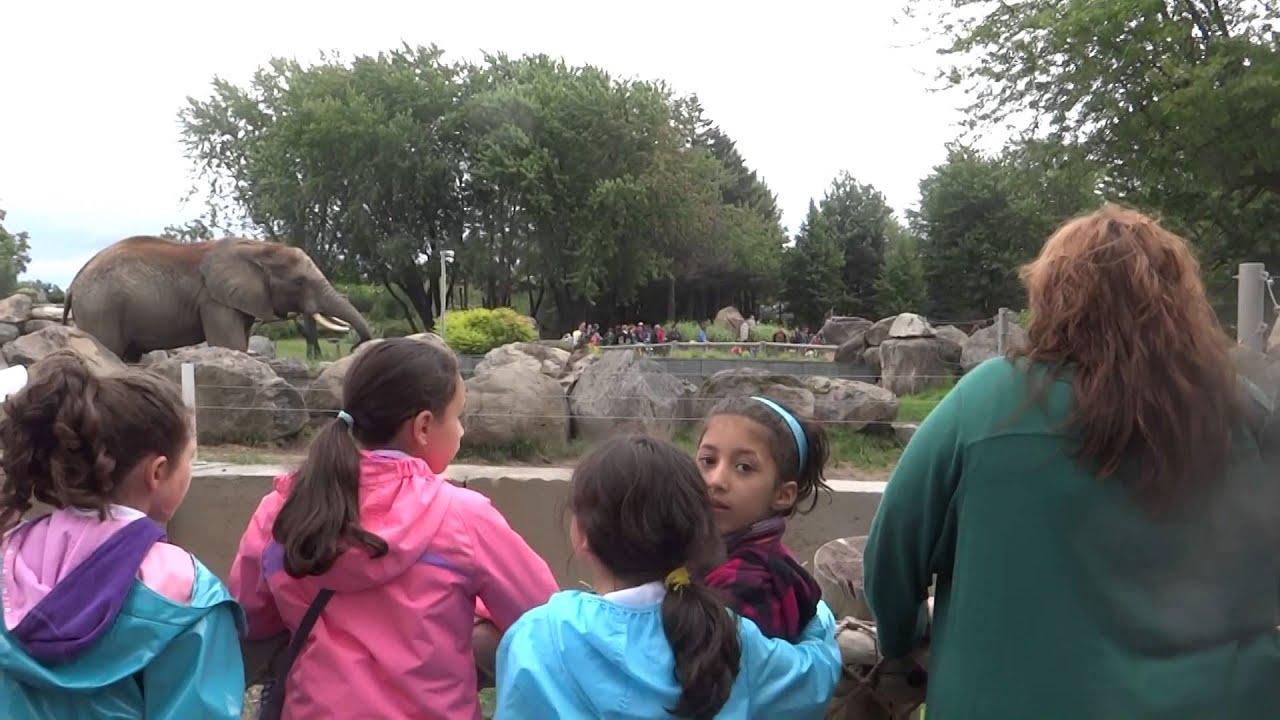 Badr sortie au zoo de granby youtube