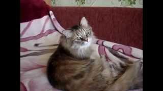 Кошки - это животные, полосатые и усатые.