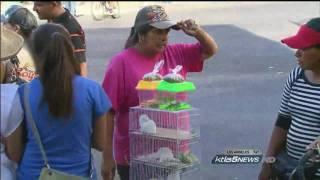 Illegal Rabbits Sale « Los Angeles KTLA News Report