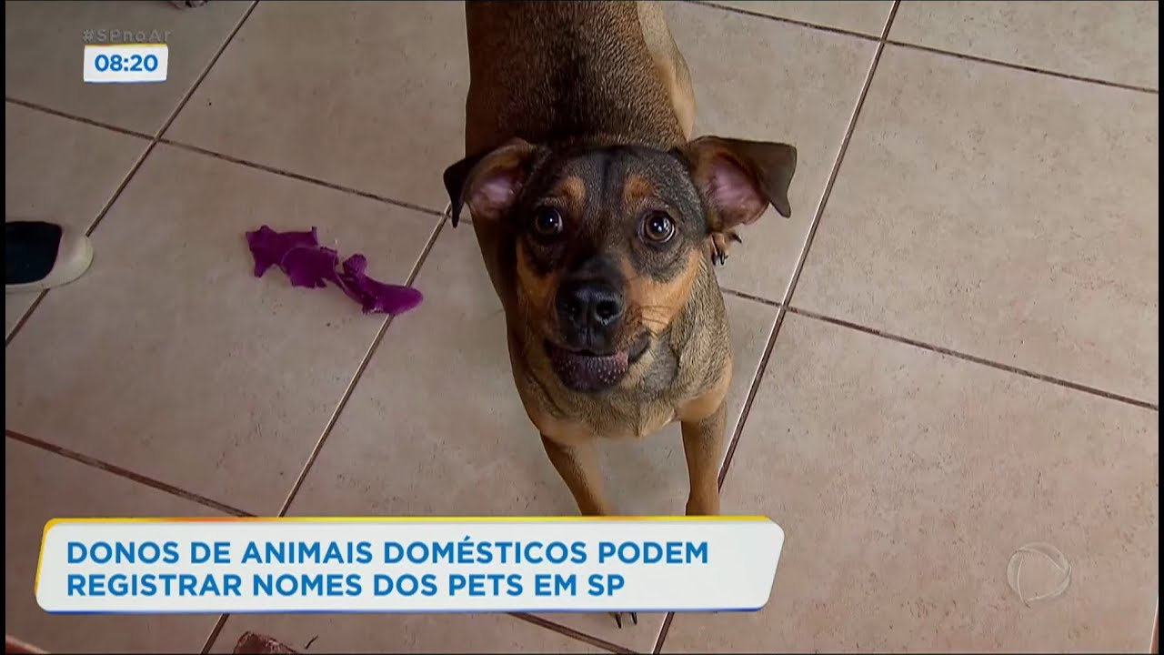 Donos de animais de estimação podem registrar nomes dos pets em SP