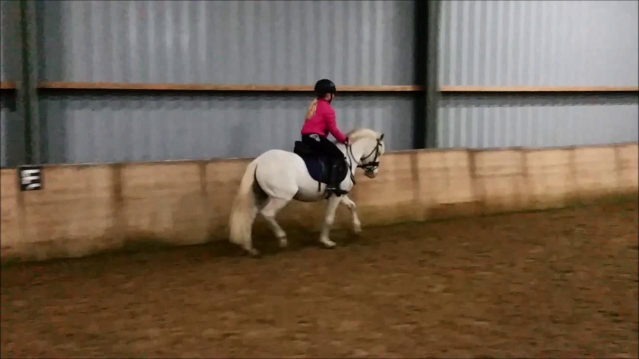 Wonderlijk Te koop veelzijdige brave Welsh pony VERKOCHT - YouTube SQ-23