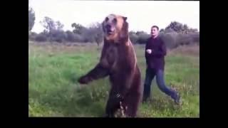 Страшное нападение Человека на медведя!!!