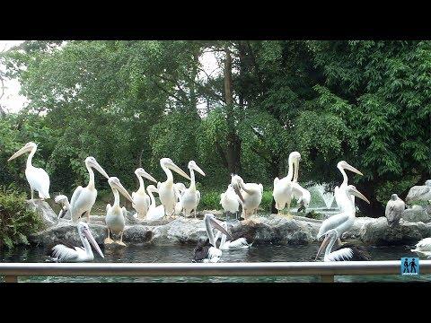 wisata-singapura---jurong-bird-park-taman-burung-terbesar-di-asia