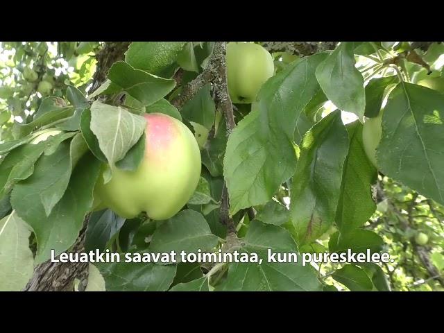 Ikäinstituutti: Omenoita oksilla, Kunnon eväät - liike 27