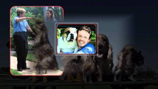 Dog Trainer & Puppy Training Classes - Barkbusters