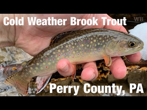 WB - Cold Weather Brook Trout, Perry County, PA - March '19