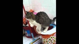 Toilet training my cat Yuka