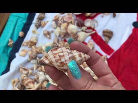 Cleaning my Seashells from my Sanibel Island Florida Trip