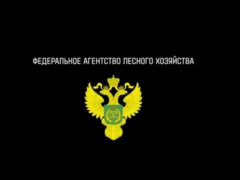 """Документальный фильм """"Лесоустройство / ГИЛ"""""""
