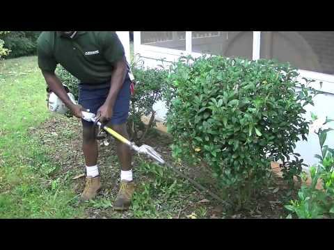 Aseem Landscaping 2 Hedging Gardenias Youtube