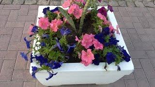 Эти прекрасные петуньи / These beautiful petunias(Какие прекрасные цветы эти петуньи. Какое разнообразие сортов, красок.Красивые цветы радуют наш глаз с..., 2015-10-08T15:47:47.000Z)