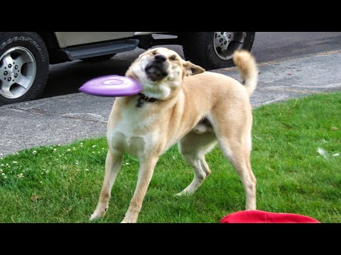 🐶 Dogs And 😹 Cats In Funniest Situations - Funny Animal Videos 😂