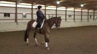 Lindinhof Sales Horse: Likotito 4 4 15