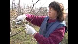 Обрезка персика(http://zemledelie.org.ua., 2013-05-07T14:21:44.000Z)