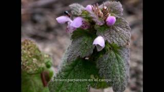 UPNA. El herbario