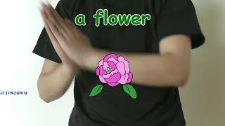 【幼児】英語で手遊び How plants grow? 植物の育ち方 英語の歌 thumbnail