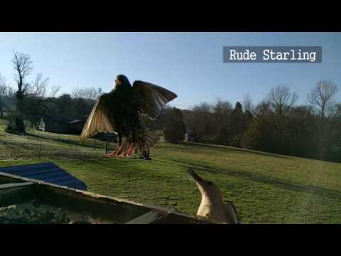 Backyard Birds of Tennessee - Slow Motion (with birding quic