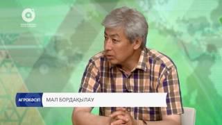 Агрокәсіп | Мал бордақылау (20.07.2017)