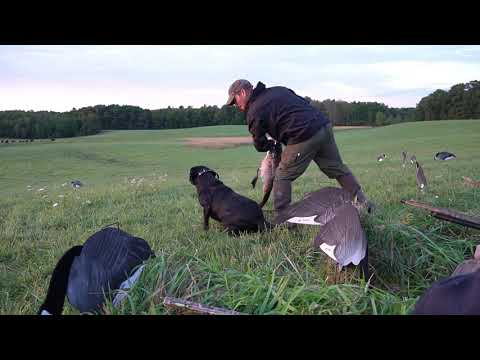 NY September Goose Hunting 2019