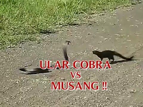 Sejarah Kelantan