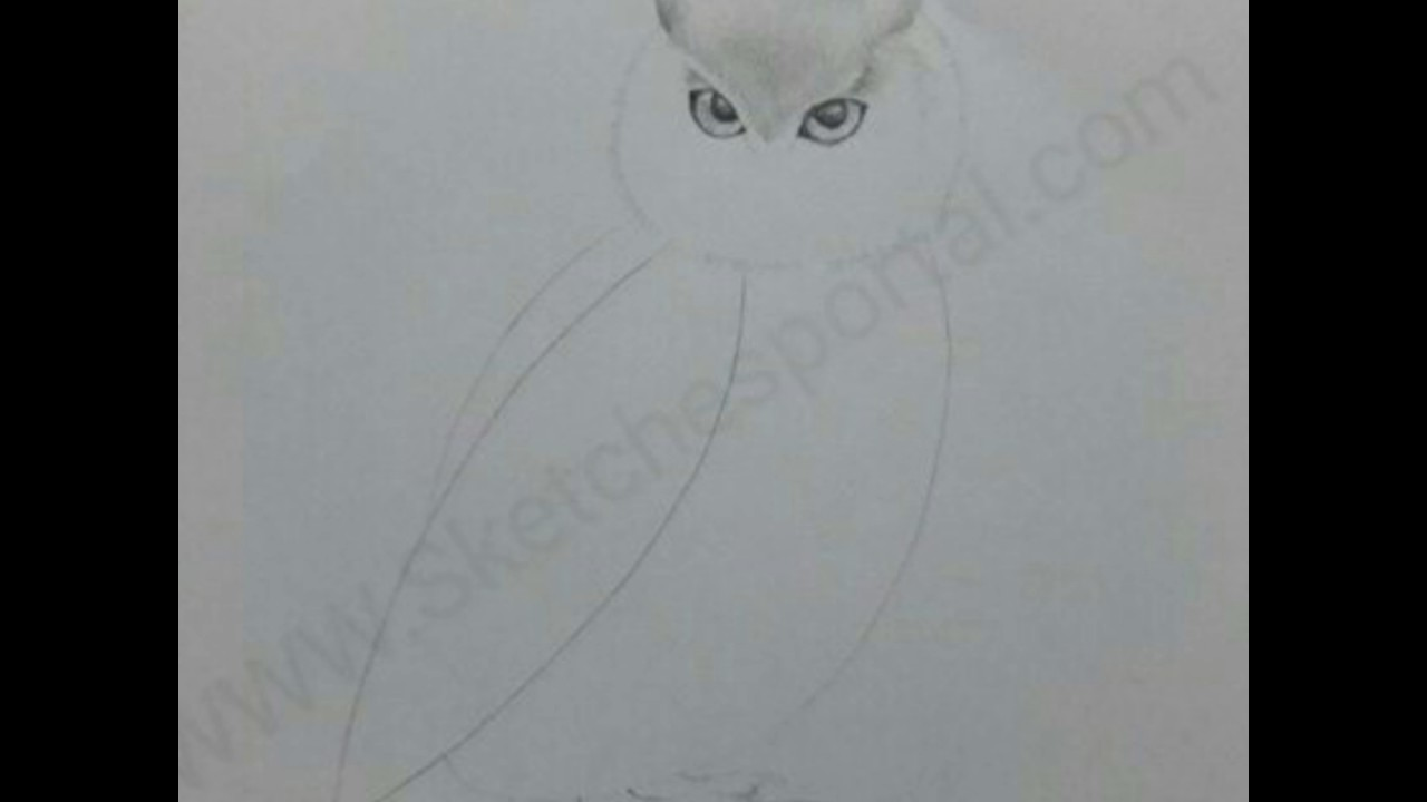 How to Draw a Snowy Owl In 20 Steps   YouTube