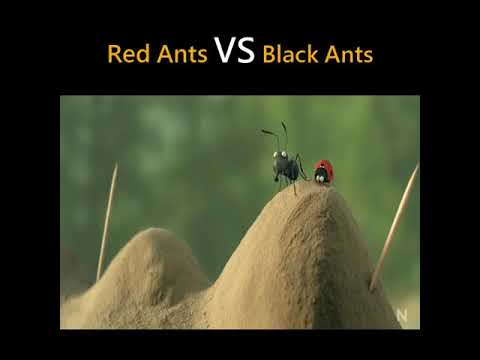 Download Red Ants vs Black Ants
