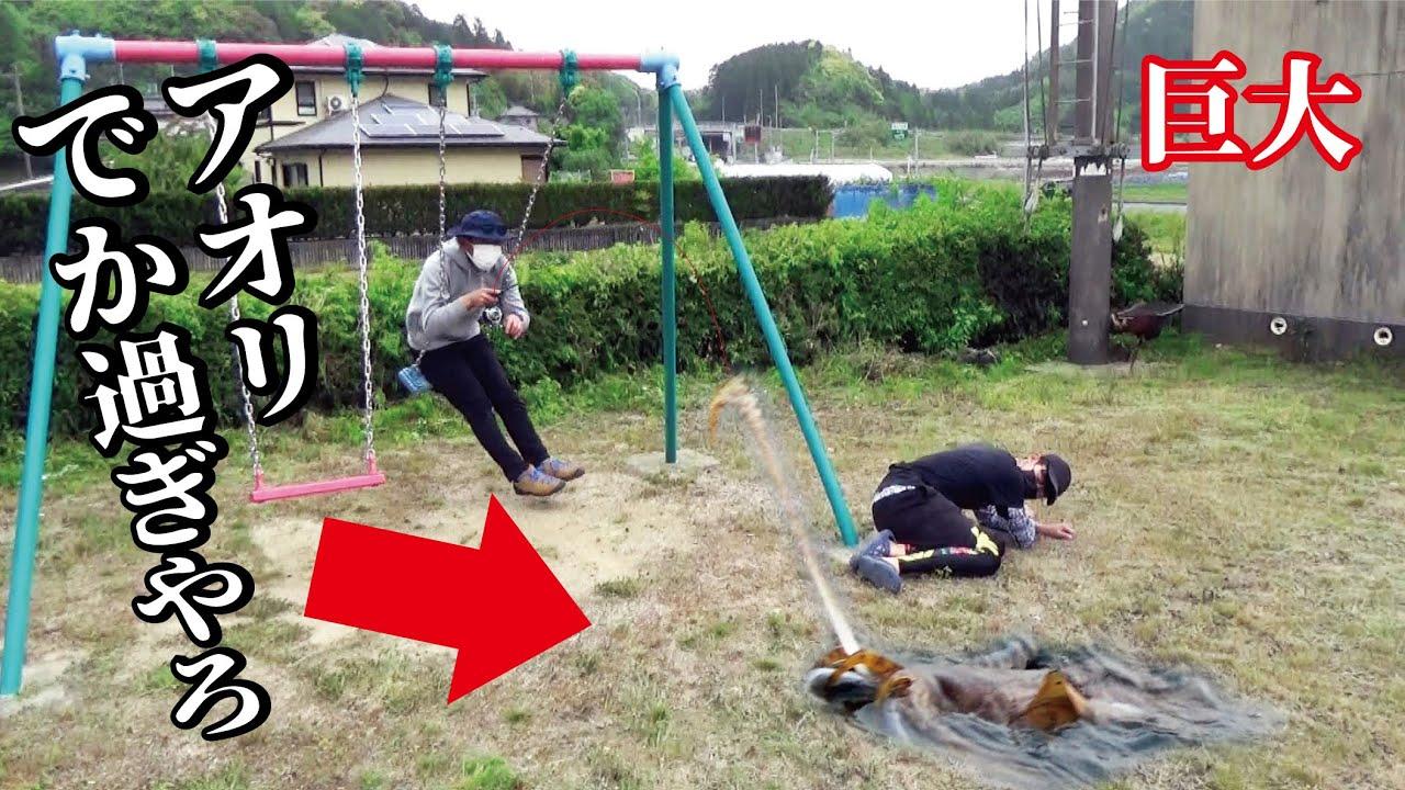 近所の公園でまさかの猛鍛錬とんでもない巨大アオリ生物が喰いついてきたー