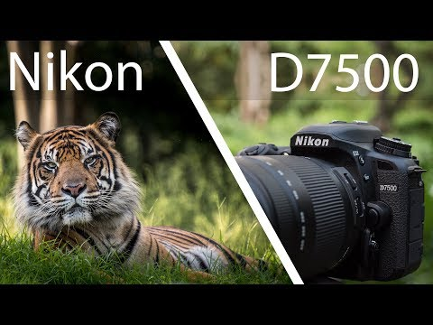Nikon D7500 Review - Powerful But Not Perfect