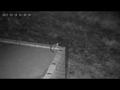 Wildlife on CCTV- Cape Genet
