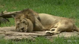 North Carolina Zoo | NC Weekend | UNC-TV
