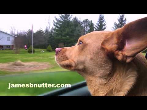 driving-dog-(national;-15)
