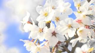 春よ、来い for Mandolin, Mandola Duo 作曲:松任谷由実 編曲:横溝史...
