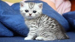 Кошка рожает, смотреть видео онлайн.