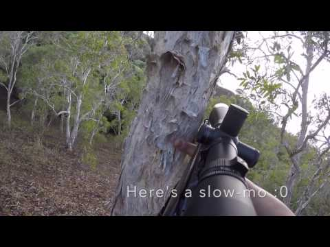 New caledonia day 7 1:2:2016 Deer OPs