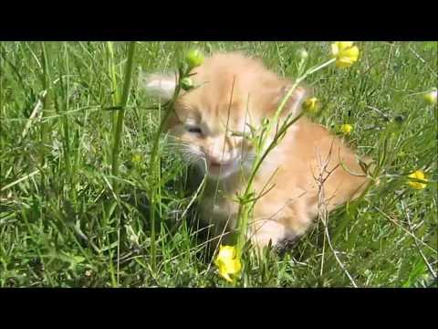 рыжие котята фото